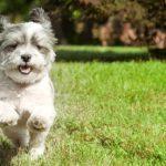 Cachorro correndo no parque