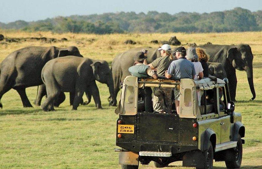 turismo na África do Sul - safári